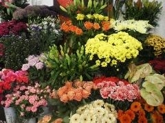 florist seasonal choice
